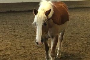 Vil lære mer om hest i rehabilitering